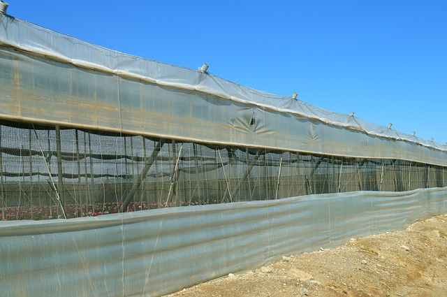 3 Things to look for in a greenhouse